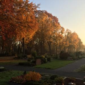 Herbst 1 IMG_0607