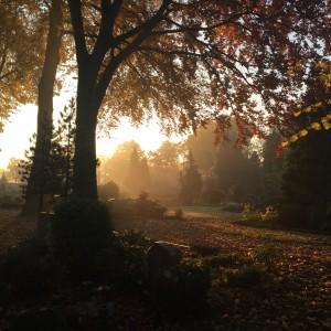Herbst 3 IMG_0610