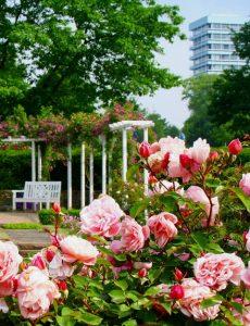 Rosengirlanden schlingen sich um den Senkgarten.